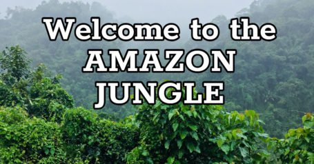 Welcome to the Amazon Jungle - Just for Brave Explorers!